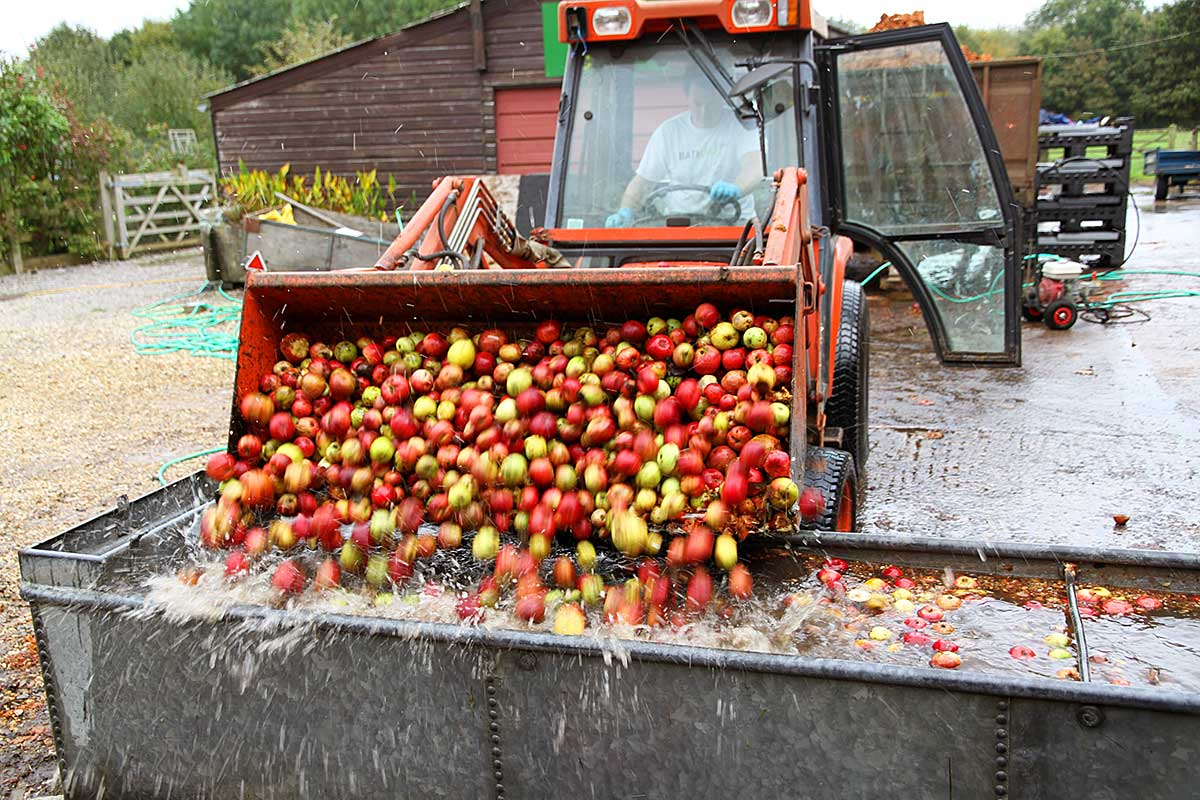 Cider Making 2014